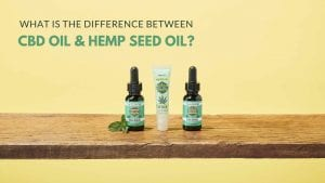 What are the differences between Pure CBD Oil & Hemp Seed Oil?